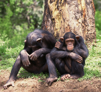 do you have what it takes to work for a primate sanctuary an